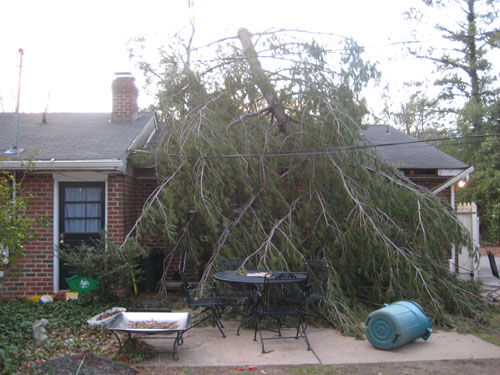 Tree on back of Ems house