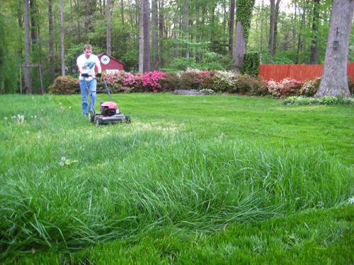 turn a bare patchy yard into a lush lawn with a few tips and tricks, Natural flower